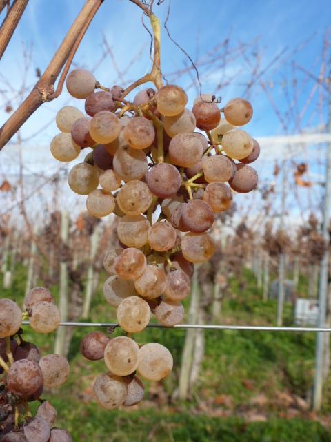 lifestyle équilibré Tasty Life Magazine vin boissons fêtes jurançon sud ouest grappe vigne