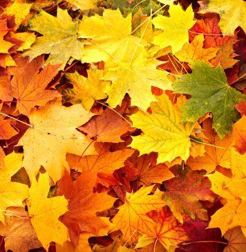 feuilles automne tasty life magazine