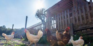 poulet tasty life magazine
